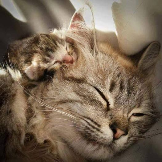 Www Facebook Com With Images Cute Animals Mama Cat Cats