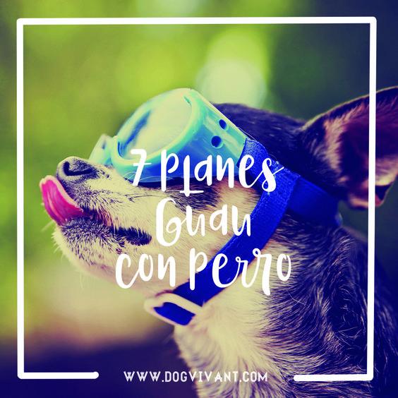 Esperamos que tengas tiempo, porque te están esperando estos 7 planazos dog-friendly muy divertidos para superar la depresión postvacacional.