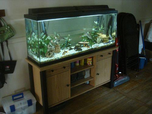 50 Gallon Aquarium Fish Tanks Pinterest Aquarium