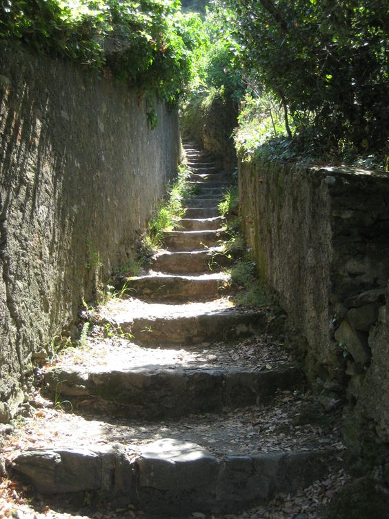 Parco delle 5 Terre - Path between Monterosso and Vernazza.   Photo by Laura Massei on 18th august 2011