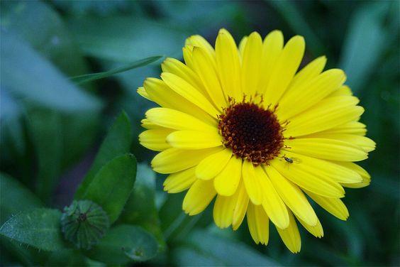Calendula (aka potted marigold)- does well in shade, annual