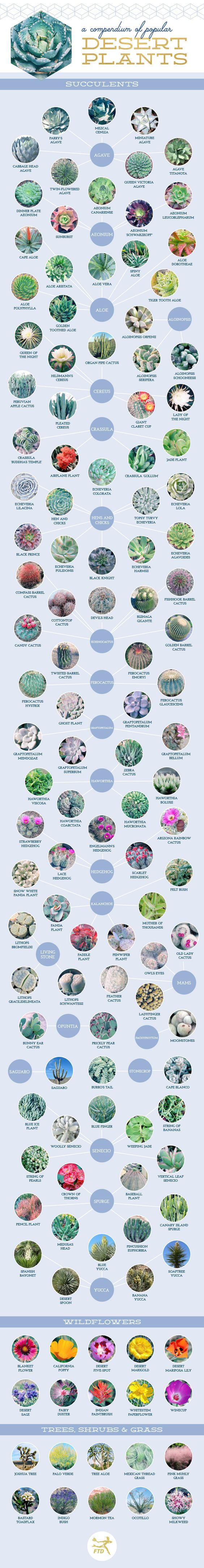 Don't know the name of your succulent or cactus plant? This great Compendium of 127 Stunning Desert Plants and Succulents may help. Image shared with permission of ftd.com. For help on propagating succulents please visit thegardeningcook.com