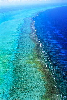 Belize Barrier Reef. The Belize Barrier Reef is a series of coral reefs straddling the coast of Belize, roughly 300 meters offshore in the north and 40 kilometers in the south within the country limits.     Onne Van der Wal, Corbis #xoBelize