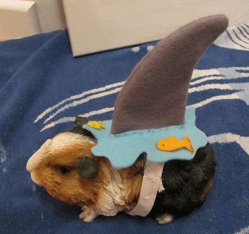 DIY Pet Halloween Costumes - Make your own Halloween costume for your pets - dog cat and other pet costume idea - shark costume | Furry Friends | Pinterest. & DIY Pet Halloween Costumes - Make your own Halloween costume for ...