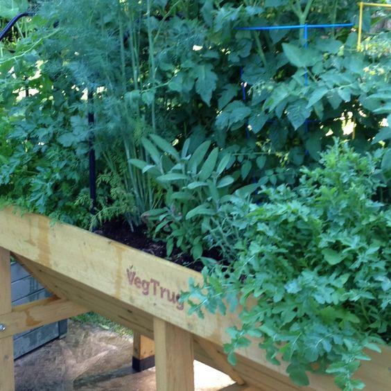 Waist high gardening!