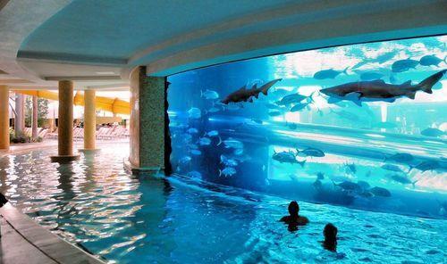 Swim swim swim, OMG A SHARK SWIM!!!