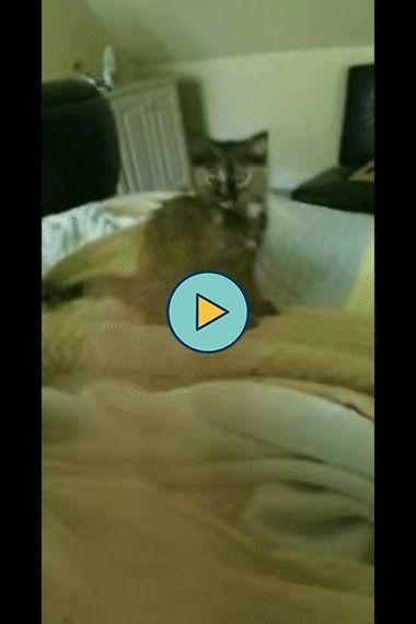 A melhor maneira de tirar o gato de cima da cama