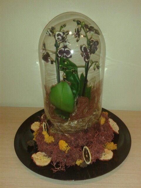 Orchidee onder een stolp