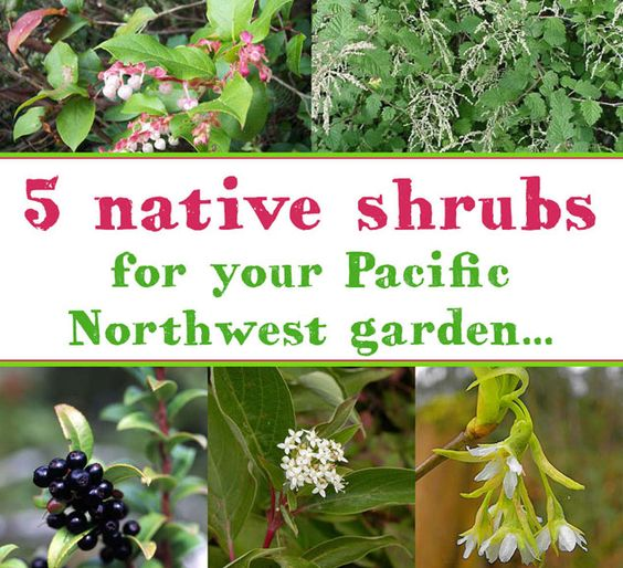 five pacific northwest native shrubs to plant in your garden