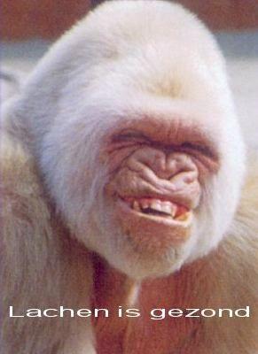grappige dieren fotos