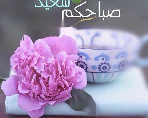 صور صباح الخير Archives Zina Blog Beautiful Morning Messages Good Morning Arabic Good Morning Images Flowers