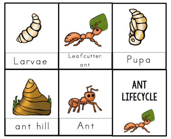 how to teach preschoolers about ants