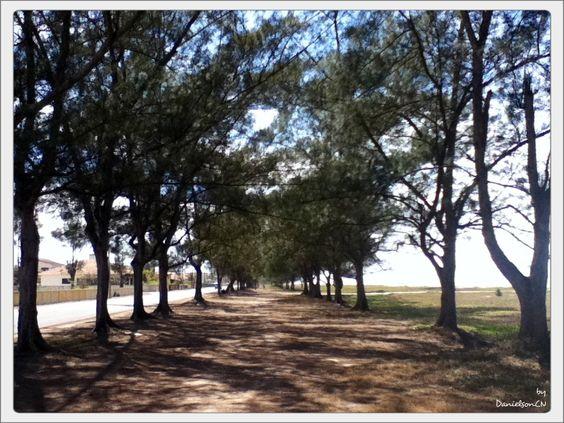 Paths... Valuable when decided by some! (Caminhos... Valioso quando decidido pelo certo!) by DanielsonCN