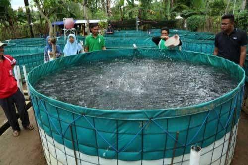 7 Tahap Cepat Budidaya Ikan Lele Yang Baik Sumber Daya Air Kolam Terpal