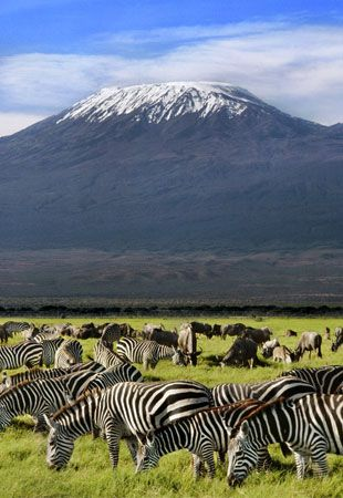 Mount Kilimanjaro, the iconic volcanic mountain is the highest point in Africa at 5,895 m. Its snowy peak stands on its own, looking over the protected savannah below which is home to many endangered species.