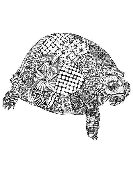 tortoise drawing for pinterest - photo #15