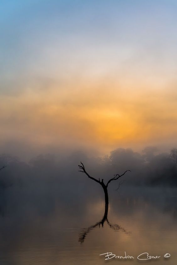 "A misty sunrise on a cold winters morning.  Elephant Plains Game Lodge, Sabi Sands Game Reserve, South Africa  <a href=""http://www.brendoncremer.com/scheduled-photo-safaris#.UtegIWS1b99"">PHOTO SAFARIS</a> 