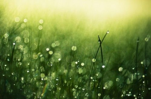 Morning Dew by Joni Niemelä