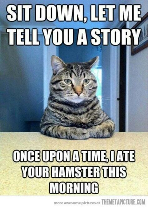 Top 35 most funniest cat quotes PurritoCat PurritoCat PurritoCat