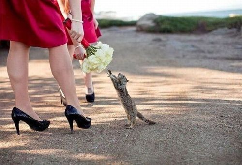 """MINE! My bouquet!""  snowbunniez:    Cute squirrel wants to get married"