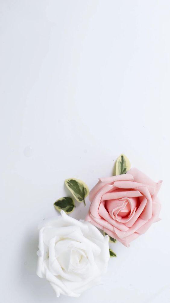 Floralwallpaper Iphonewallpaper Flower Pretty Nature Iphone Wallpaper Rose Wallpaper Iphone Wallpaper