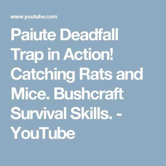 Paiute Deadfall Trap in Action! Catching Rats and Mice. Bushcraft Survival Skills. - YouTube