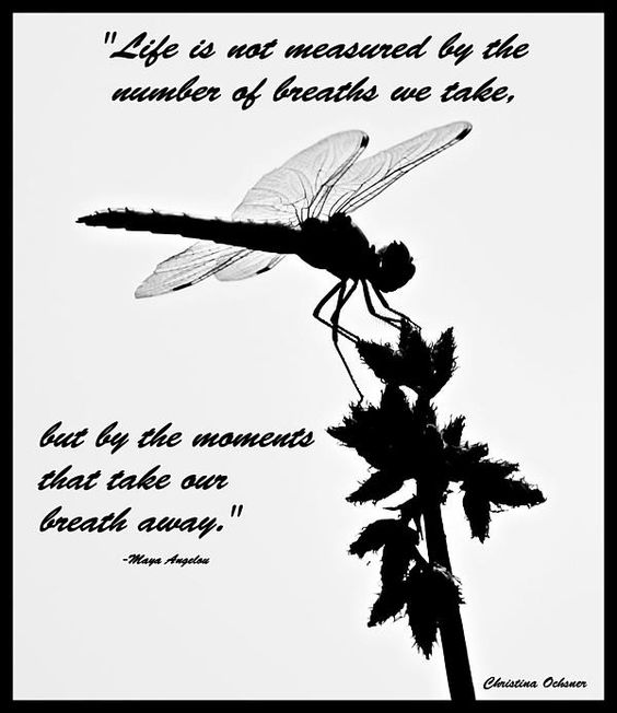 dragonfly with quote by Maya Angelou