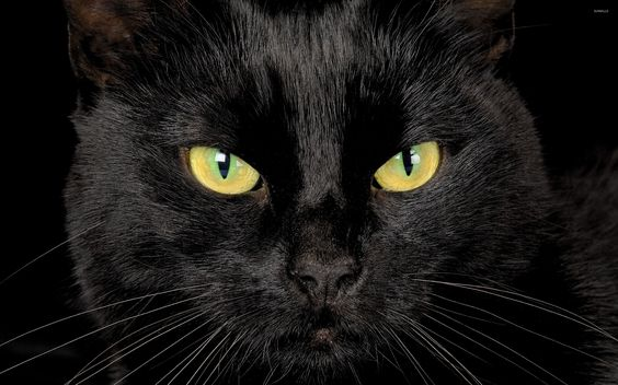Image result for closeup black cat eyes