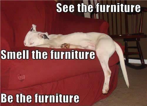 Zen doggie...