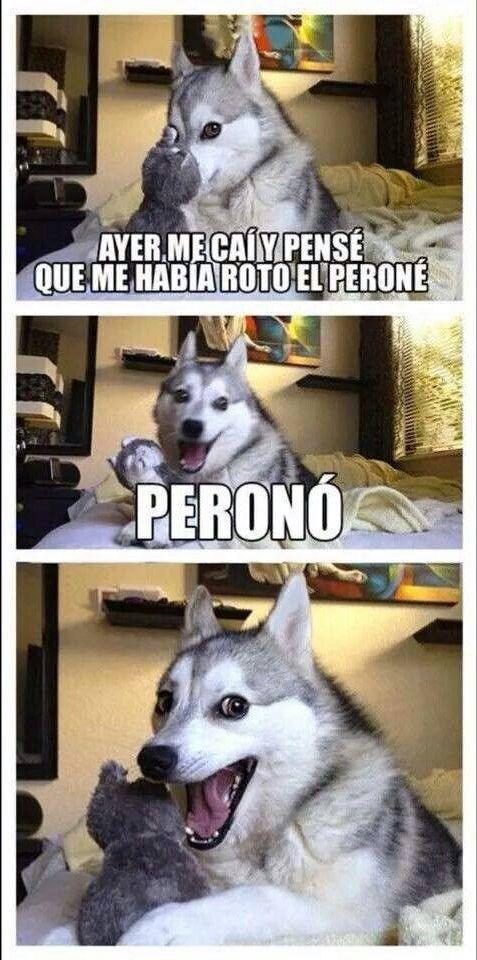 Meme De Perro Husky Buscar Con Google Chistes De Perros Humor De Perros Chistes Divertidos