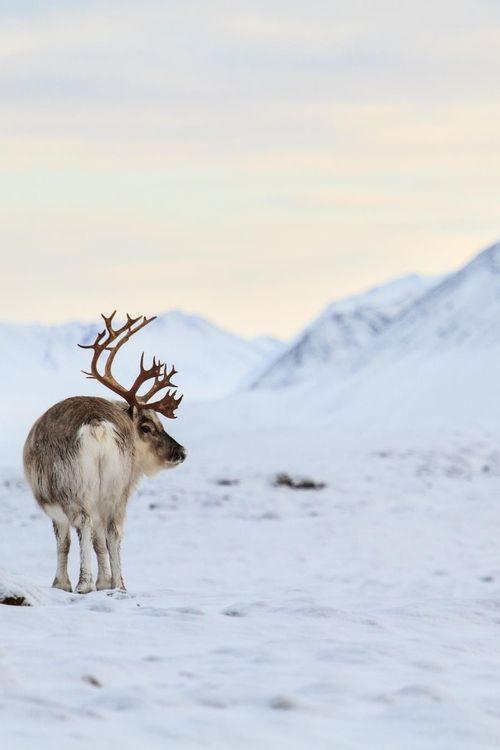 Svalbard by Arjan van Iwaarden via 500px.