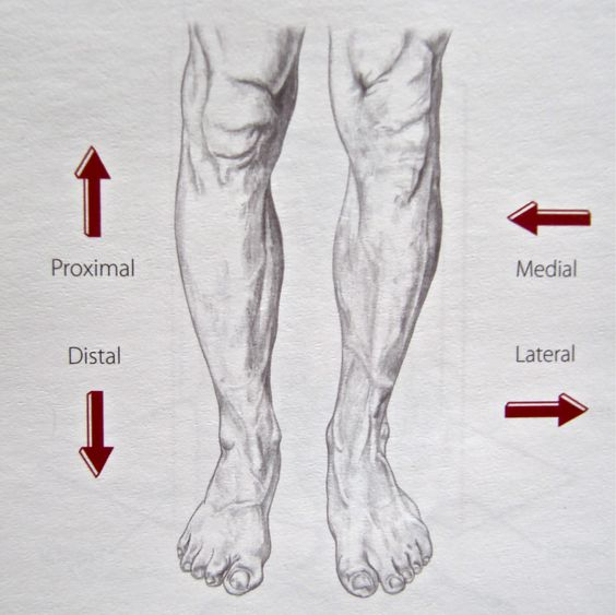 foreshortened feet and leg drawings   Notes on Anatomy and Physiology: Learning with the Hand and Elbow  
