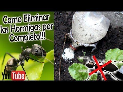 Como Acabar Con Las Termitas En La Pared Nuevo Sistema Como Eliminar Hormigas Negras Muy Eficaz Todo