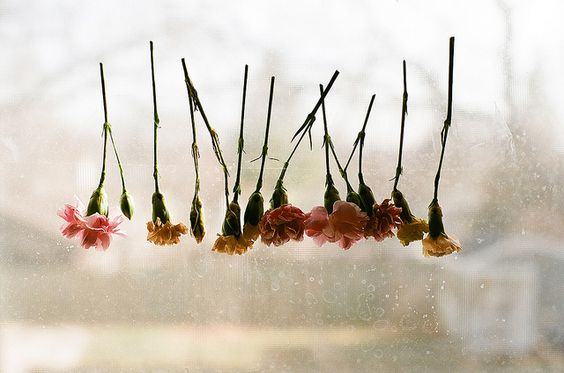 Upside down flowers