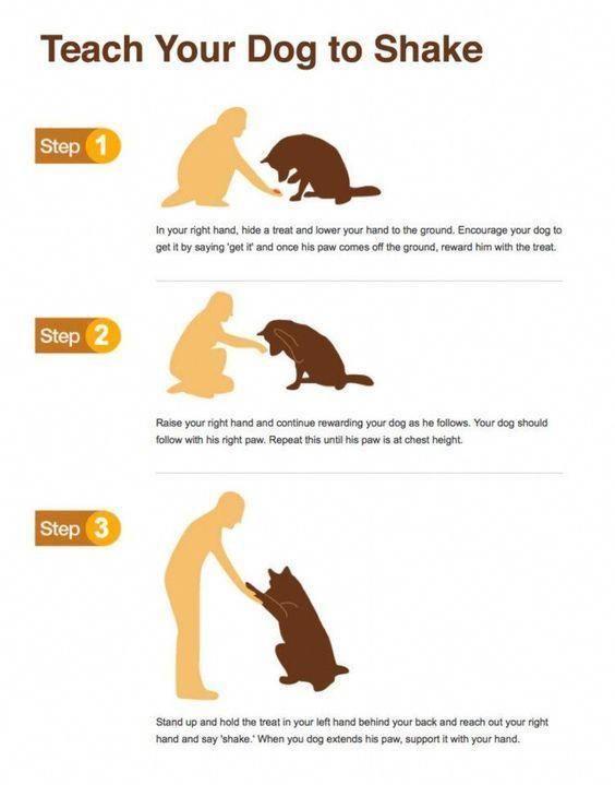 Teach Your Canine To Shake Hands Dog Training Collars Dog