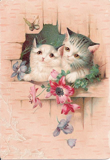 sweet kittens trade cards from sellers