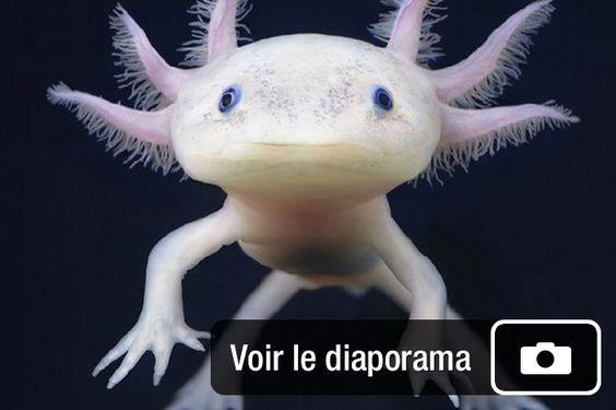 Diaporama sur 12 animaux aux superpouvoirs hallucinants