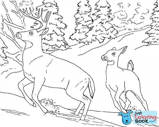 Free Printable Deer Coloring Pages For Kids Coloring Pages