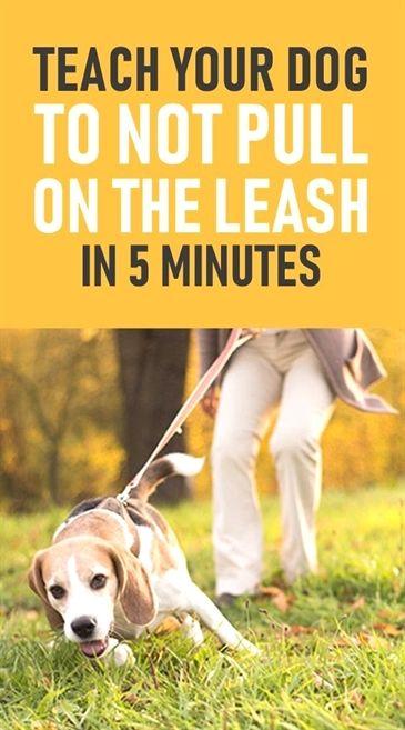 Dog Training Idaho Falls Dog Training Resources How To Use A