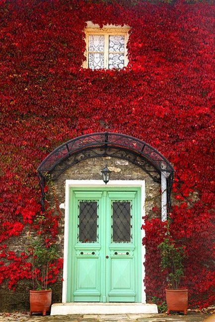 Beautiful red climbing vines on walls of house with bright green doors. #curbappeal #climbingvines