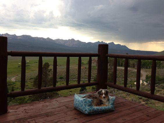 Ollie relaxing with a nice view of the Sawtooth's.