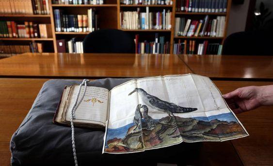 El manuscrito 'Producciones y aves marítimas...', de Antonio de Recondo, en una sala de la Biblioteca Nacional.
