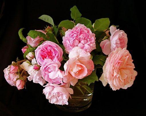 Englische Rosen <3