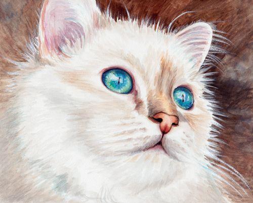 """Birman""  8 x 10"" watercolor on Ampersand Aquabord using Daniel Smith watercolors"