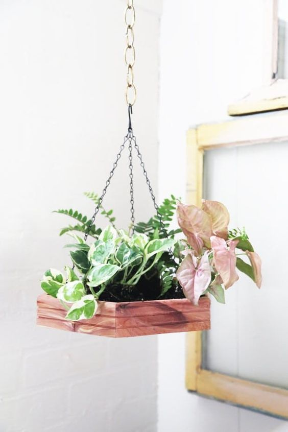 small indoor plants, best indoor plants, hanging wood planter