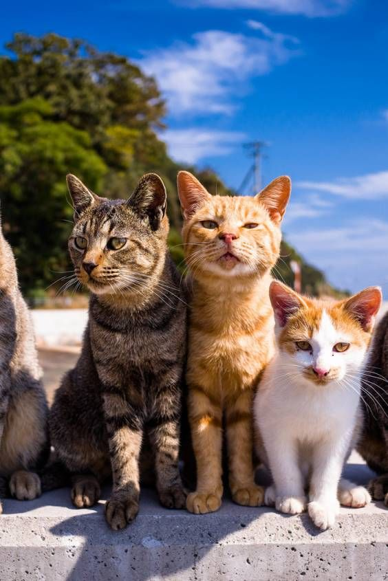 Best Time To See Aoshima Cat Island In Japan 2020 Cat Island
