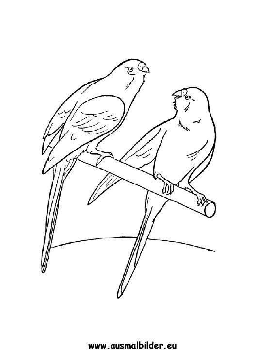 Ausmalbild Wellensittich Zum Ausmalen Ausmalbilder Ausmalbildervogel Malvorlagen Ausmalen Schule Kindergar Wellensittich Vogelzubehor Sittich