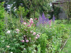 Jardin de cur amenagement fond du jardin pinterest for Modele de jardin anglais