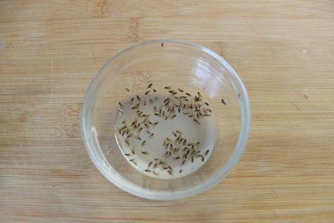 25+ parasta ideaa Pinterestissä Fruchtfliegenfalle - hausmittel gegen ameisen in der küche