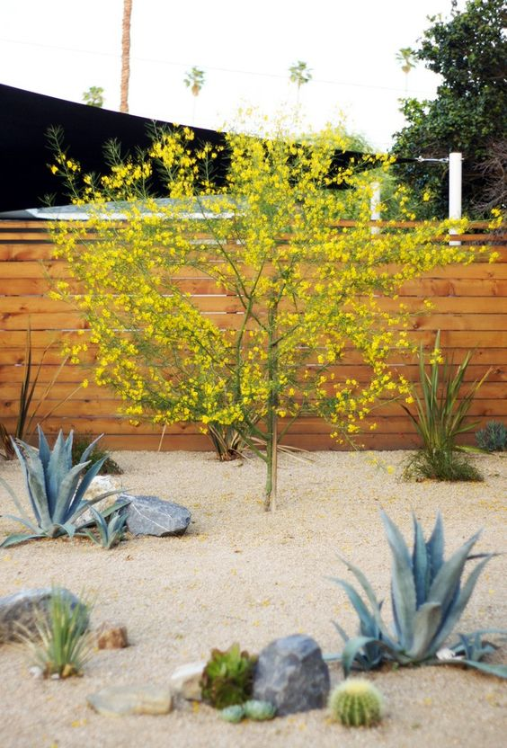 Desert Backyard Makeover : Landscape front yards, Front yards and Succulents on Pinterest